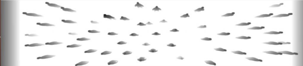 Image de profondeur (vue de dessus à 10m)